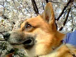 hamami2004.jpg